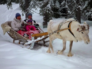 """One Reindeer Pulling a Sled"" by timo_w2s"
